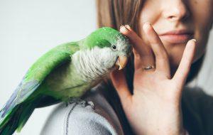 تصویر یک پرنده